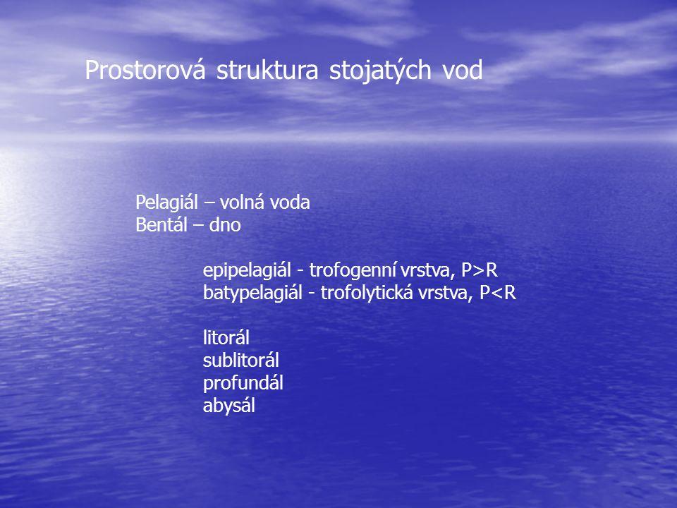 Prostorová struktura stojatých vod
