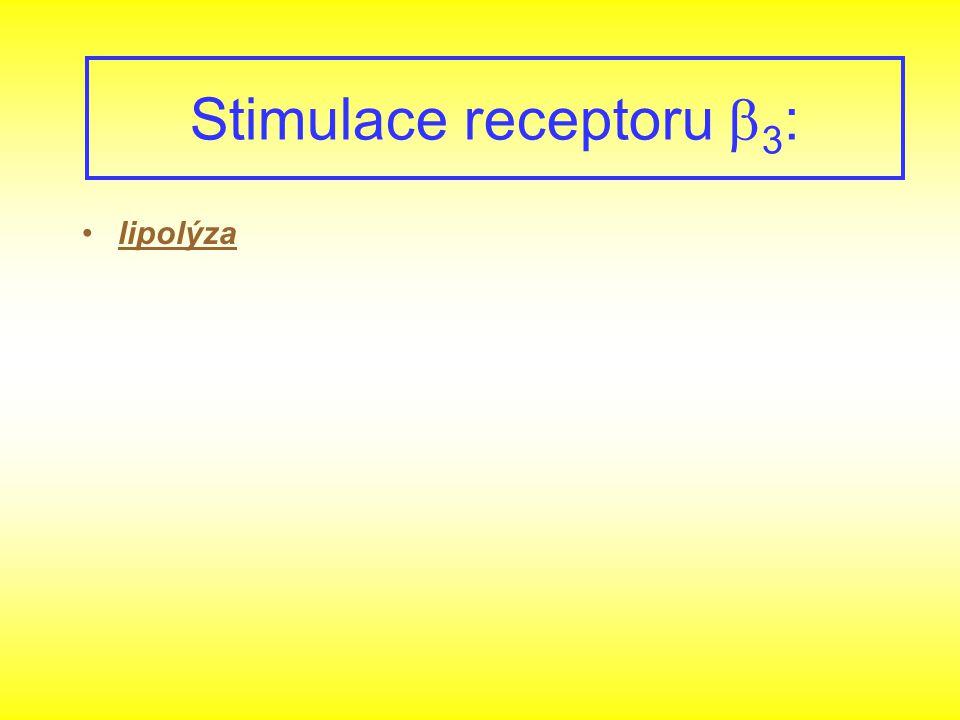 Stimulace receptoru b3: