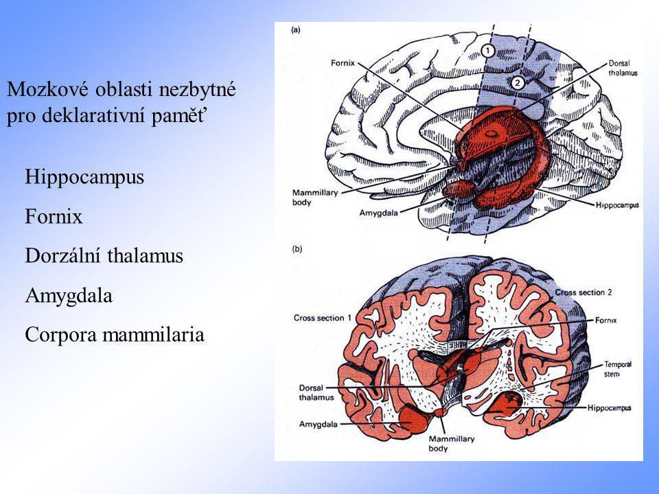 Mozkové oblasti nezbytné pro deklarativní paměť