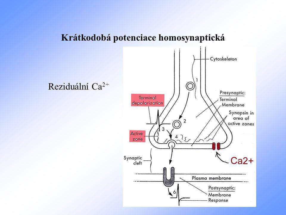 Krátkodobá potenciace homosynaptická