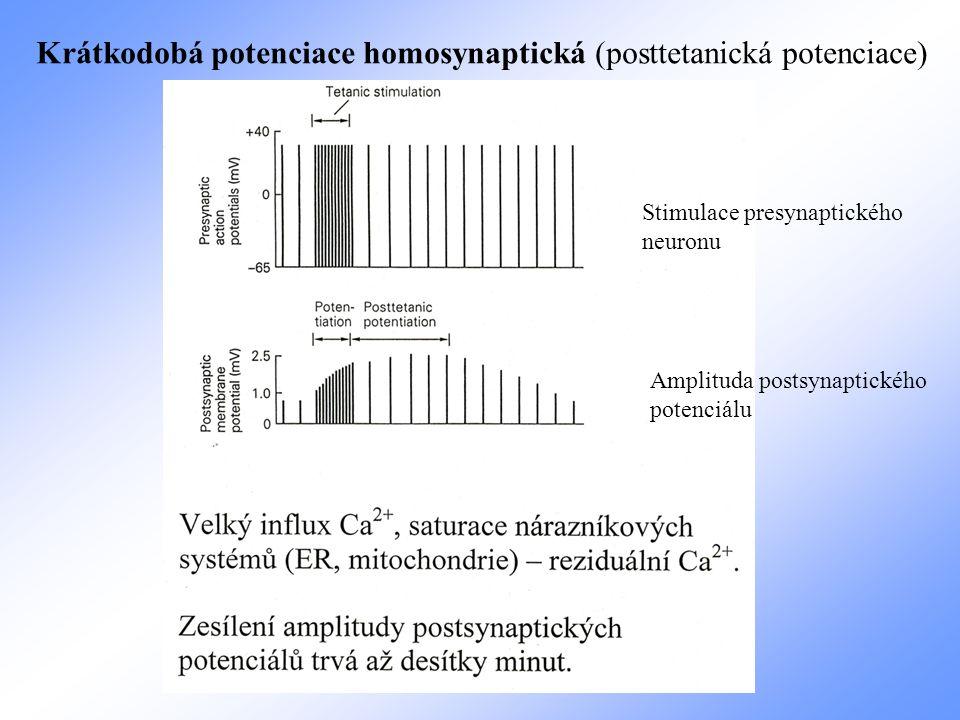 Krátkodobá potenciace homosynaptická (posttetanická potenciace)