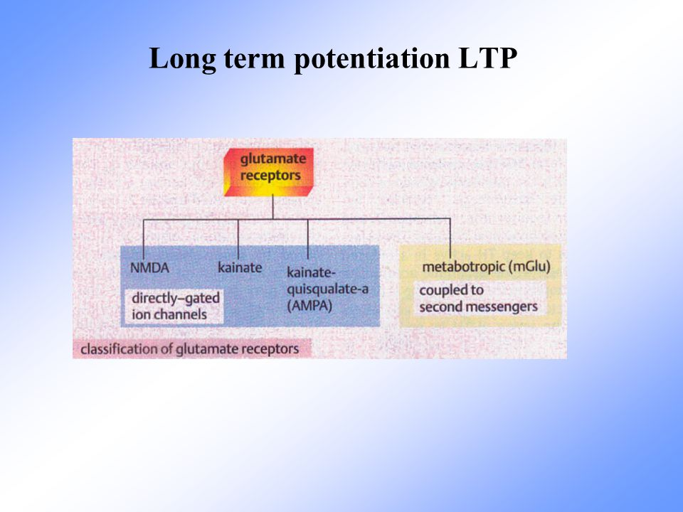 Long term potentiation LTP