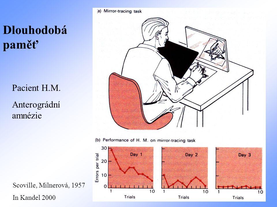 Dlouhodobá paměť Pacient H.M. Anterográdní amnézie