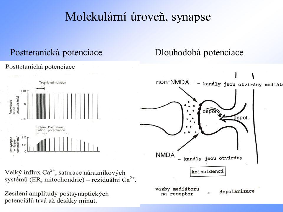 Molekulární úroveň, synapse