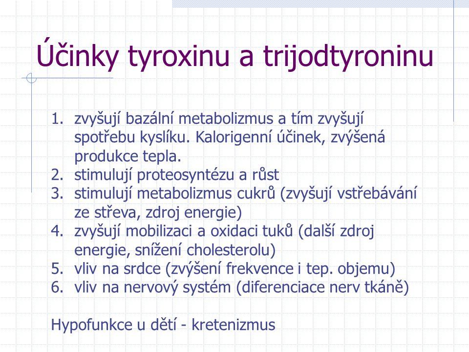 Účinky tyroxinu a trijodtyroninu