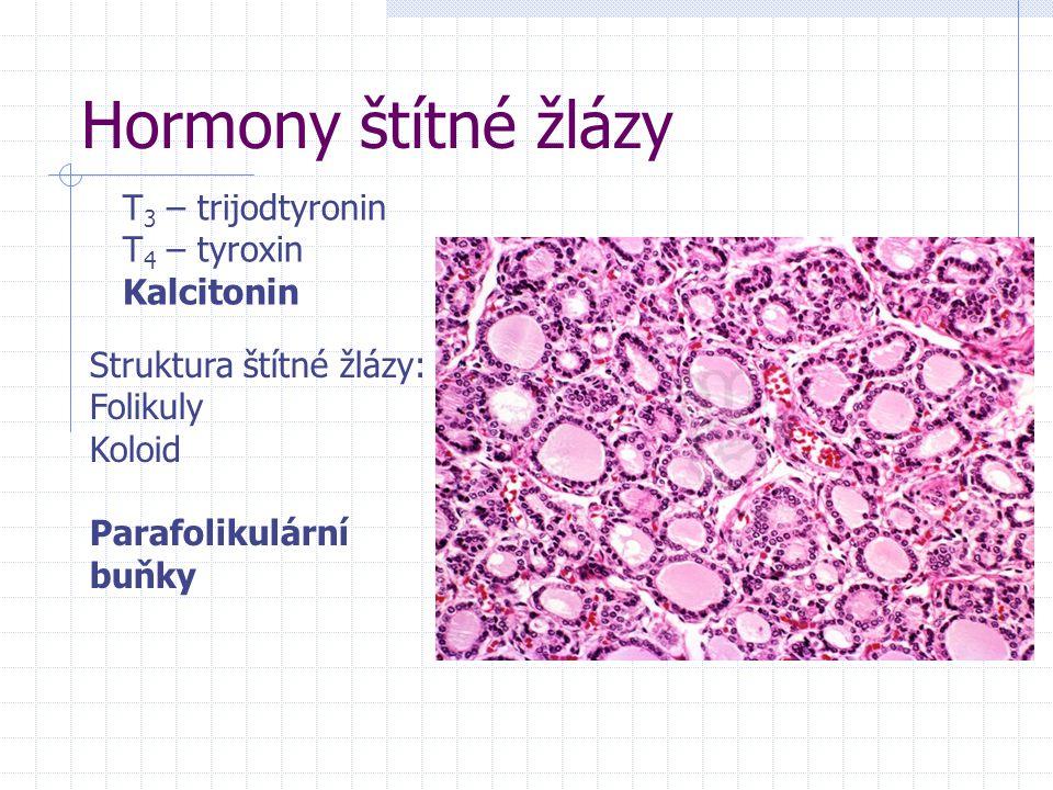 Hormony štítné žlázy T3 – trijodtyronin T4 – tyroxin Kalcitonin