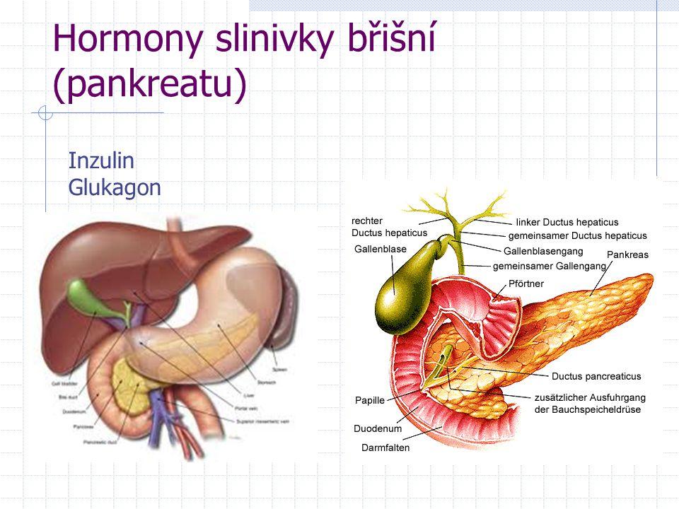 Hormony slinivky břišní (pankreatu)