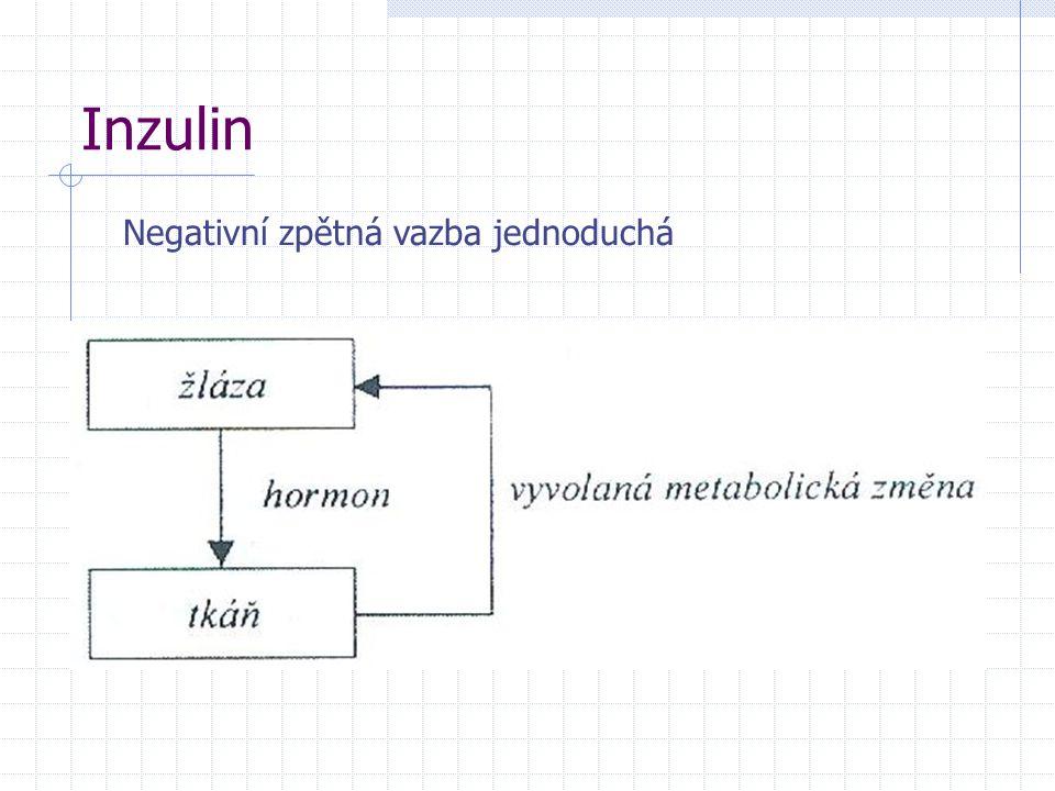 Inzulin Negativní zpětná vazba jednoduchá