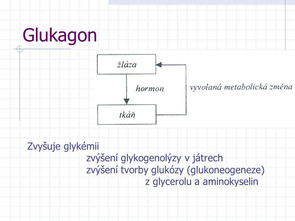 Glukagon Zvyšuje glykémii zvýšení glykogenolýzy v játrech