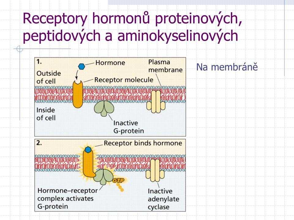 Receptory hormonů proteinových, peptidových a aminokyselinových