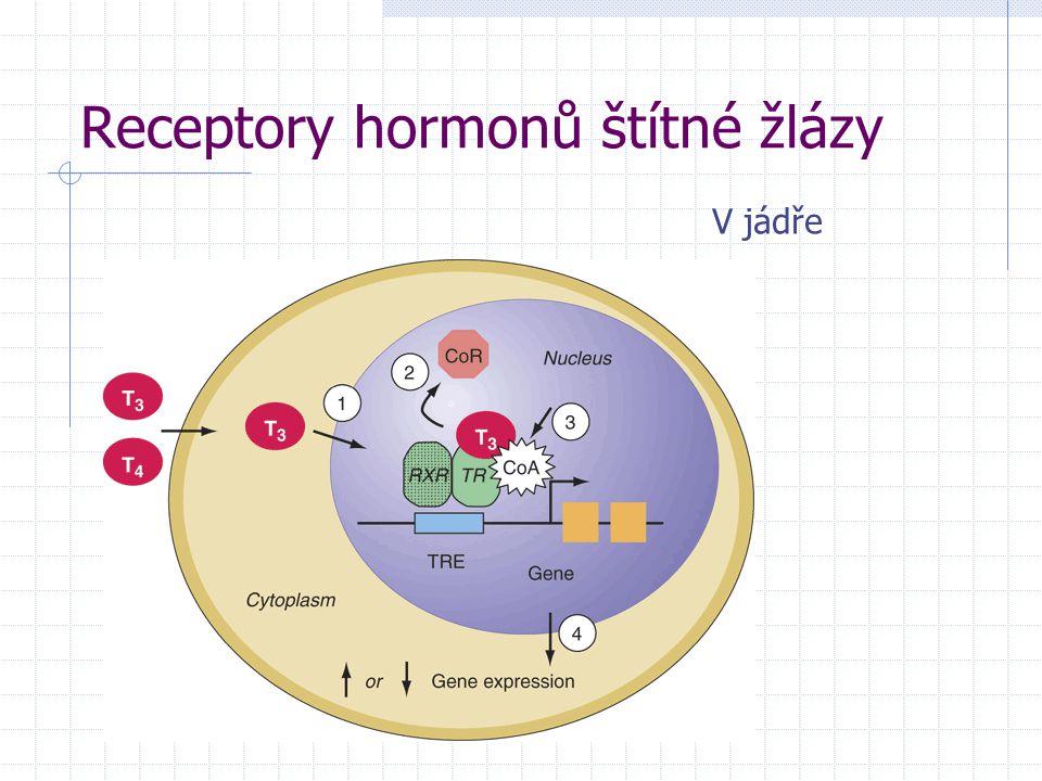 Receptory hormonů štítné žlázy