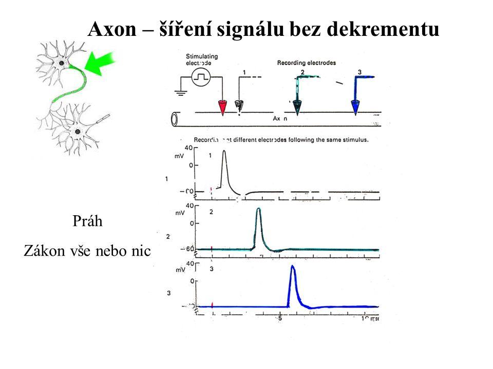 Axon – šíření signálu bez dekrementu