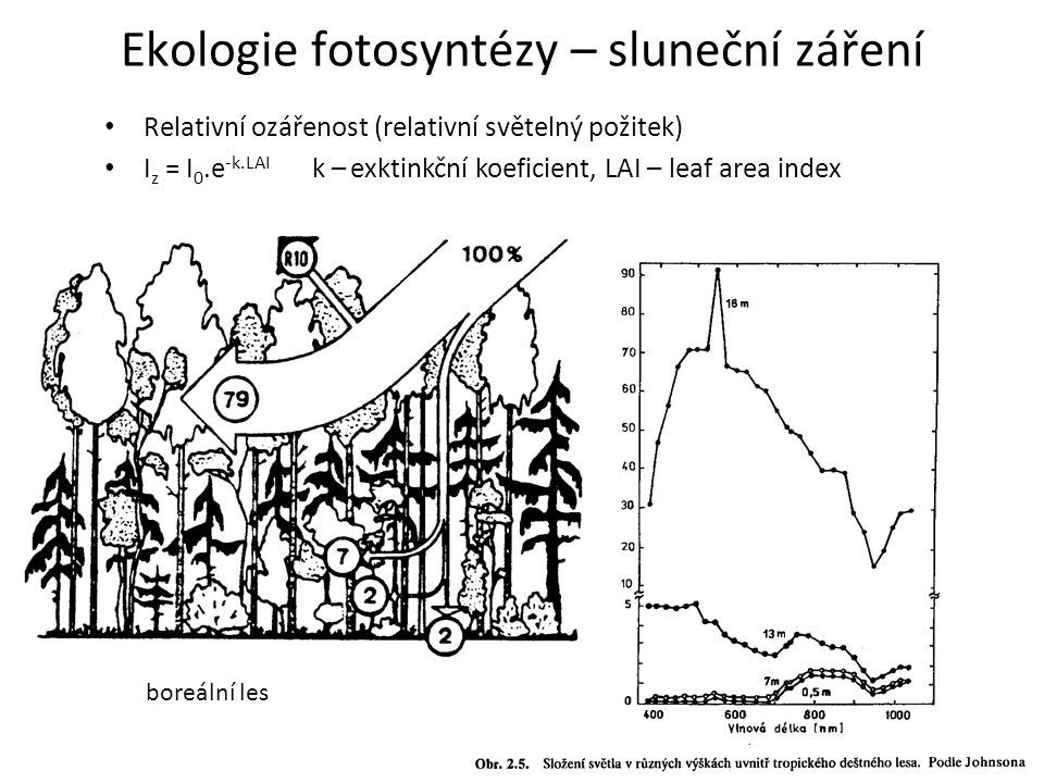 Ekologie fotosyntézy – sluneční záření