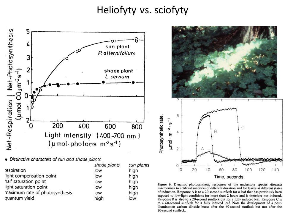 Heliofyty vs. sciofyty