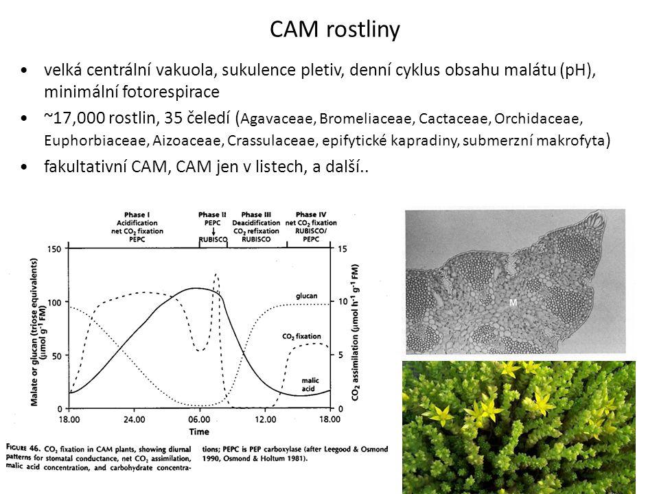 CAM rostliny velká centrální vakuola, sukulence pletiv, denní cyklus obsahu malátu (pH), minimální fotorespirace.