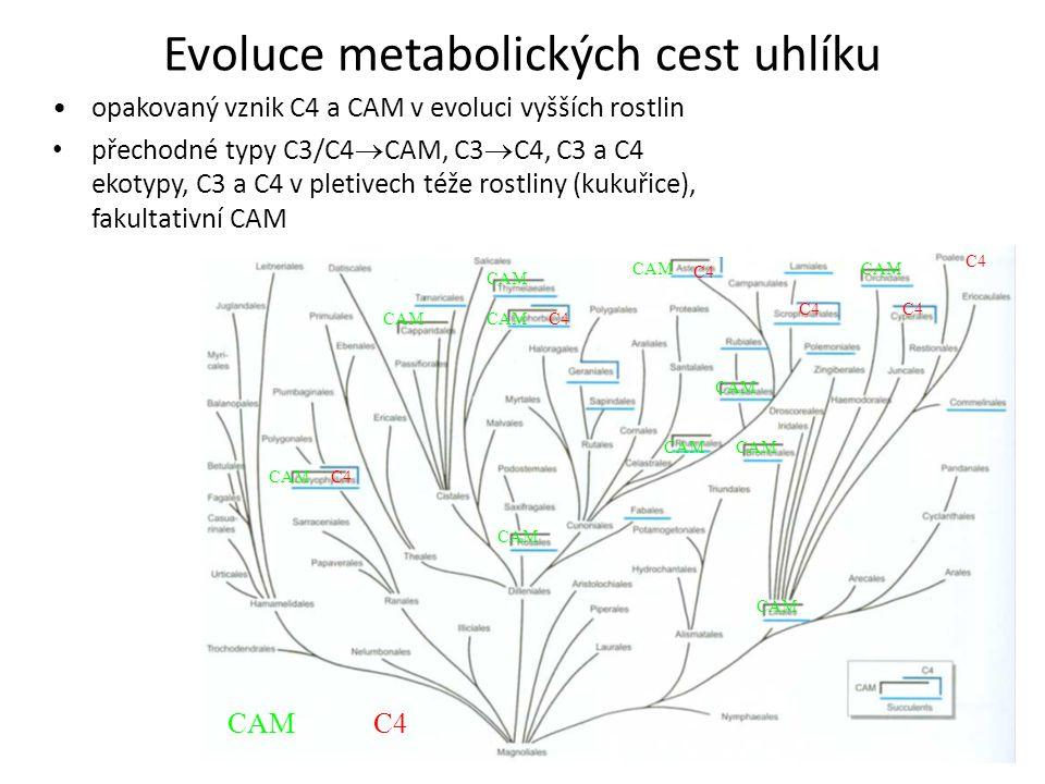 Evoluce metabolických cest uhlíku