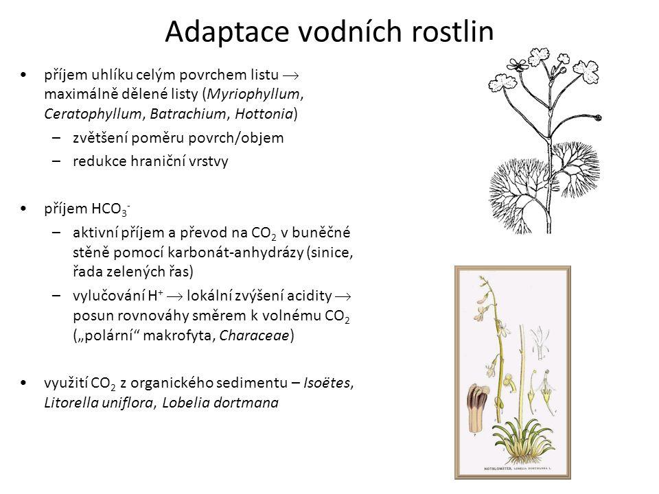 Adaptace vodních rostlin