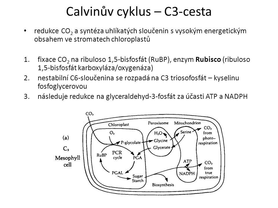Calvinův cyklus – C3-cesta