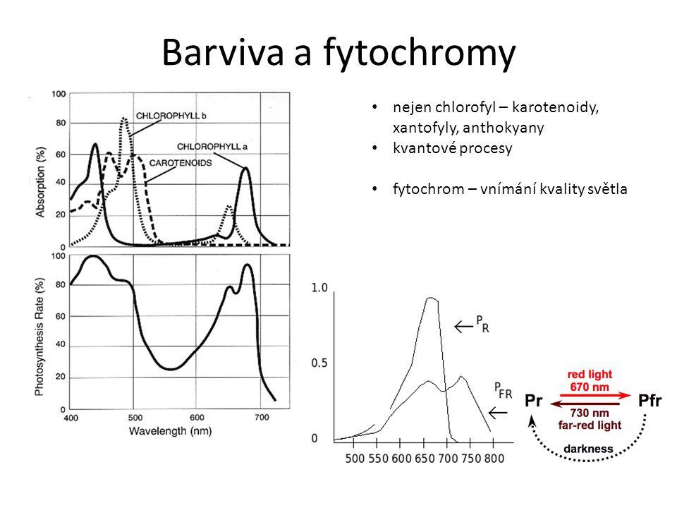 Barviva a fytochromy nejen chlorofyl – karotenoidy, xantofyly, anthokyany.