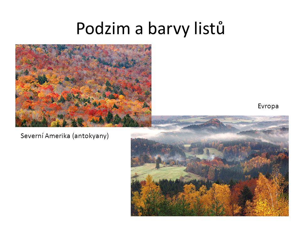Podzim a barvy listů Evropa Severní Amerika (antokyany)
