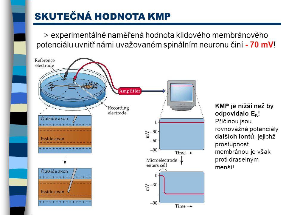SKUTEČNÁ HODNOTA KMP > experimentálně naměřená hodnota klidového membránového potenciálu uvnitř námi uvažovaném spinálním neuronu činí - 70 mV!
