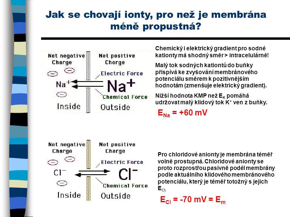 Jak se chovají ionty, pro než je membrána méně propustná