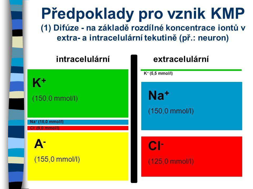 Předpoklady pro vznik KMP (1) Difúze - na základě rozdílné koncentrace iontů v extra- a intracelulární tekutině (př.: neuron)