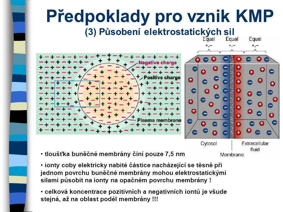 Předpoklady pro vznik KMP (3) Působení elektrostatických sil