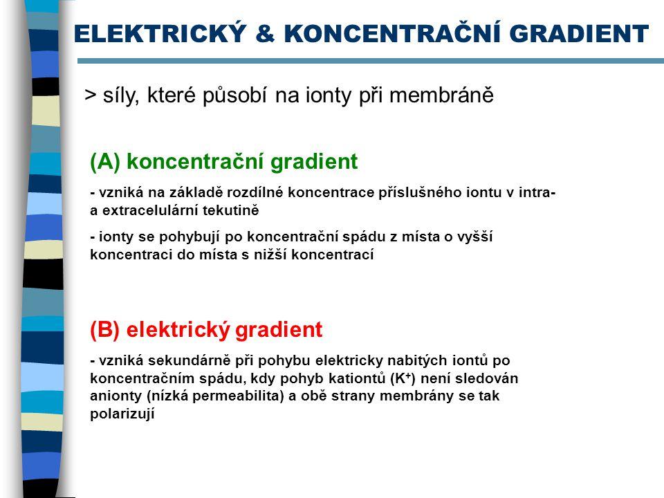 ELEKTRICKÝ & KONCENTRAČNÍ GRADIENT
