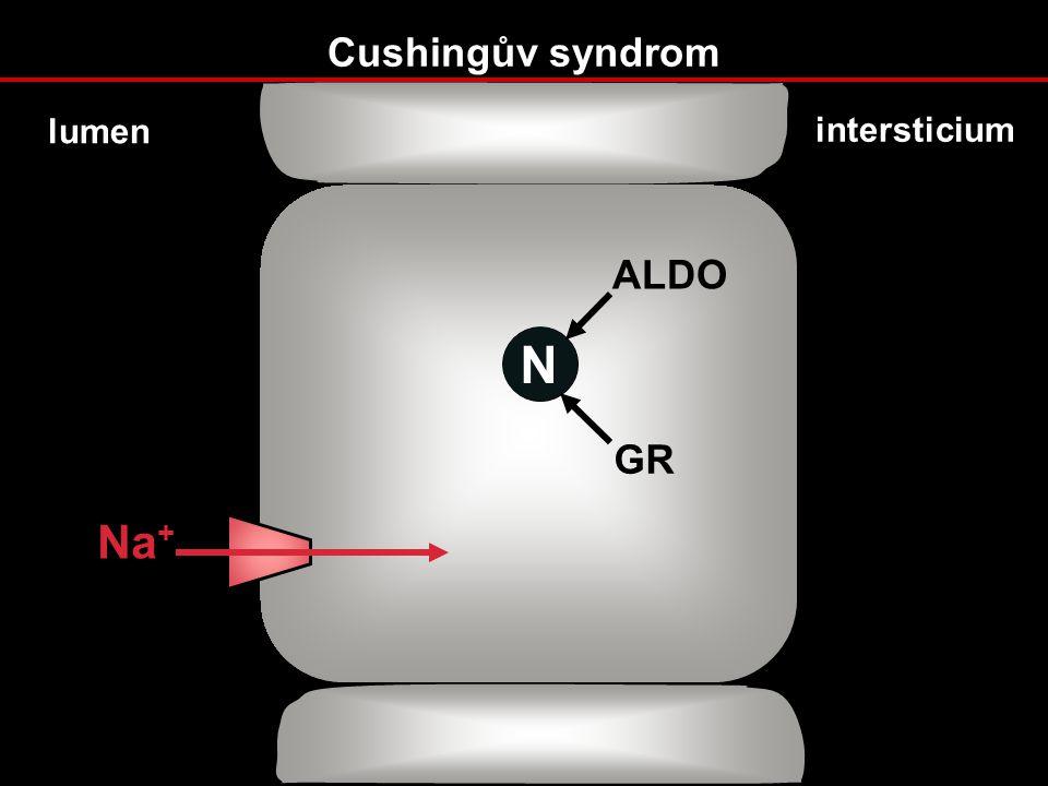 Cushingův syndrom lumen intersticium ALDO N GR Na+