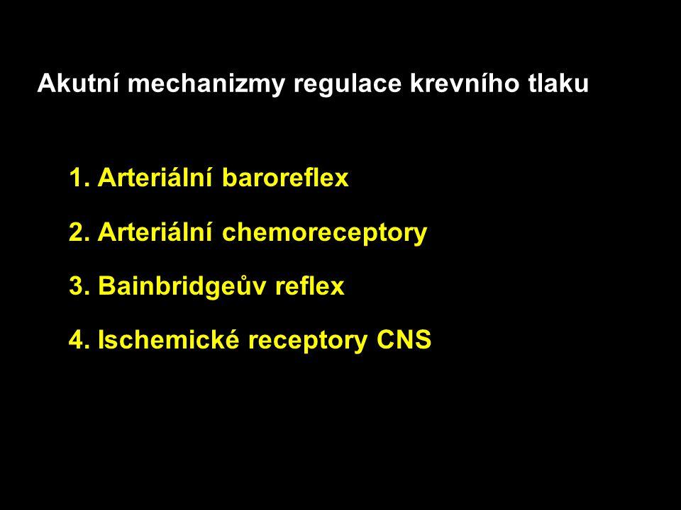 Akutní mechanizmy regulace krevního tlaku