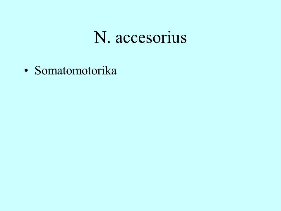 N. accesorius Somatomotorika