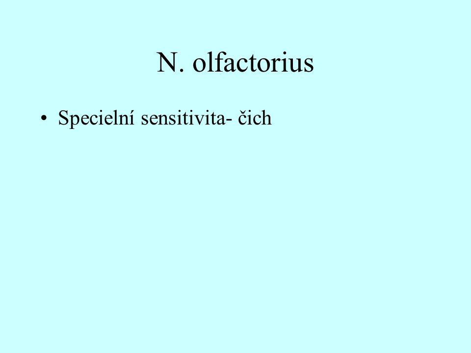 N. olfactorius Specielní sensitivita- čich