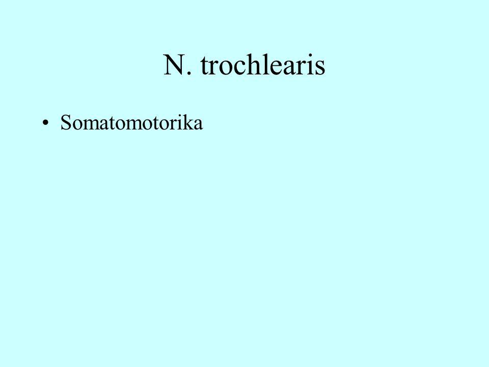 N. trochlearis Somatomotorika