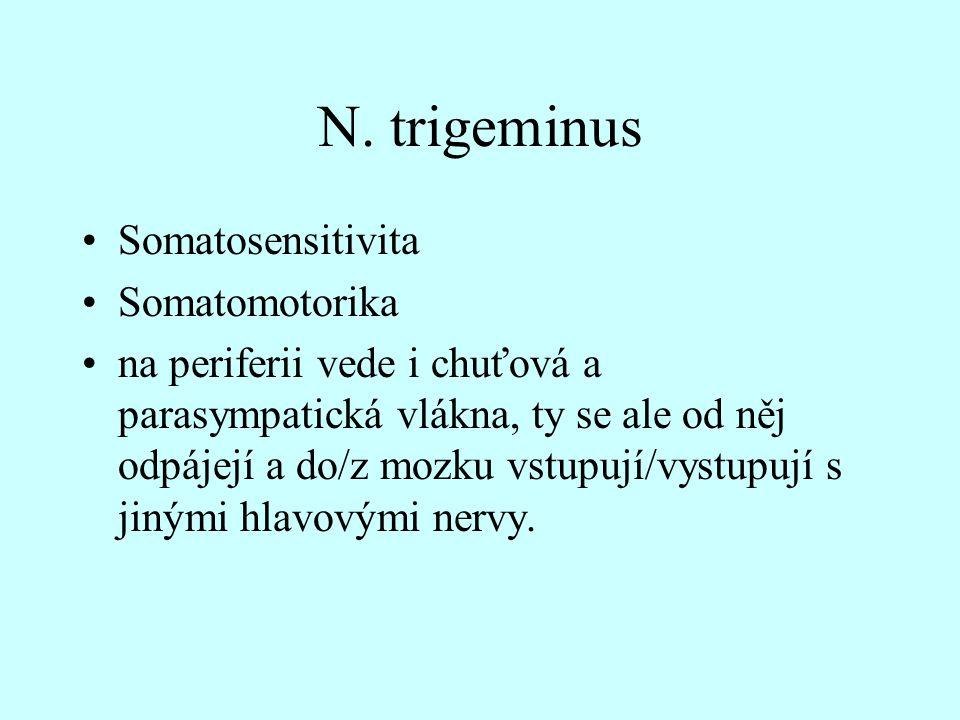 N. trigeminus Somatosensitivita Somatomotorika