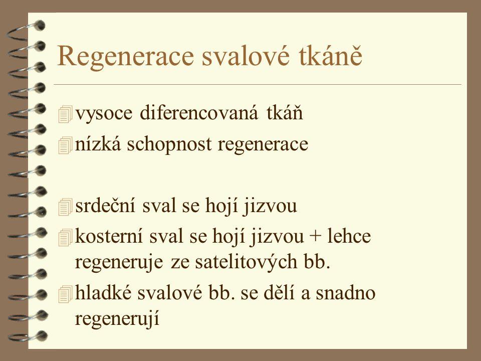 Regenerace svalové tkáně