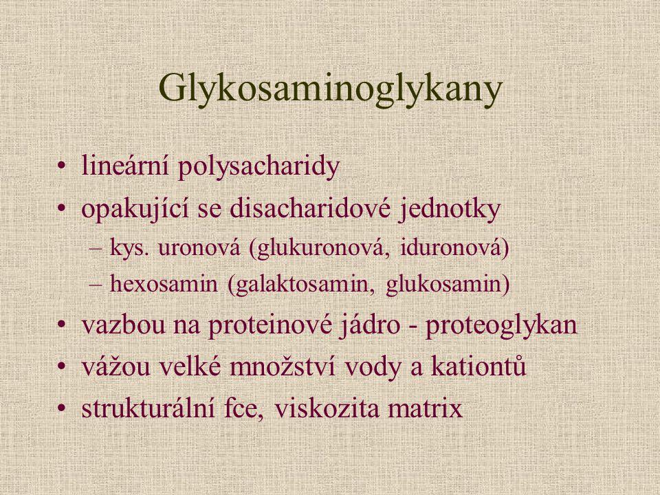 Glykosaminoglykany lineární polysacharidy