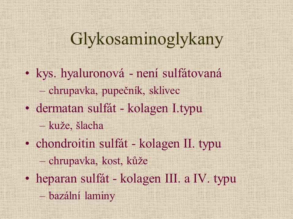 Glykosaminoglykany kys. hyaluronová - není sulfátovaná
