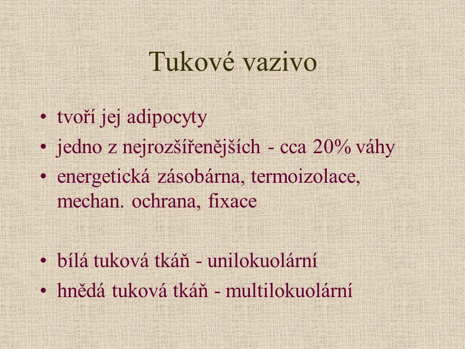 Tukové vazivo tvoří jej adipocyty
