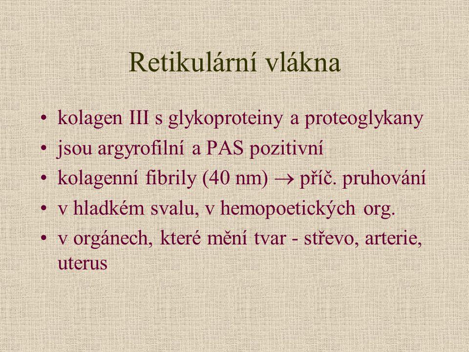 Retikulární vlákna kolagen III s glykoproteiny a proteoglykany