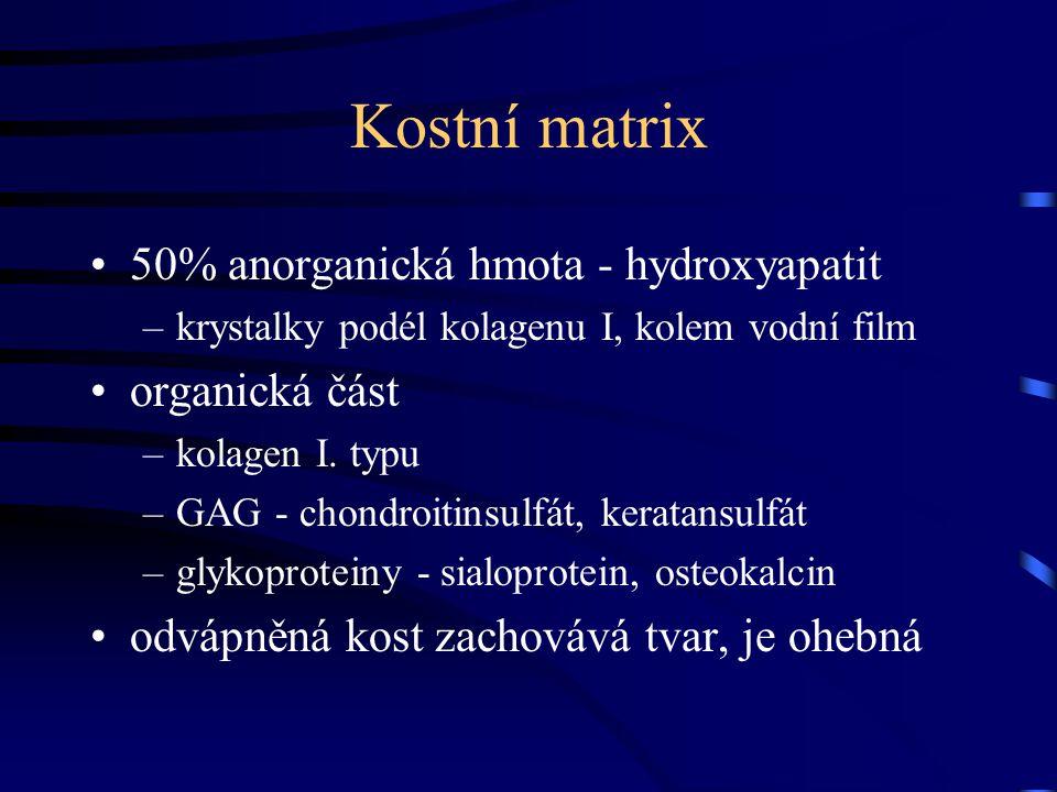 Kostní matrix 50% anorganická hmota - hydroxyapatit organická část