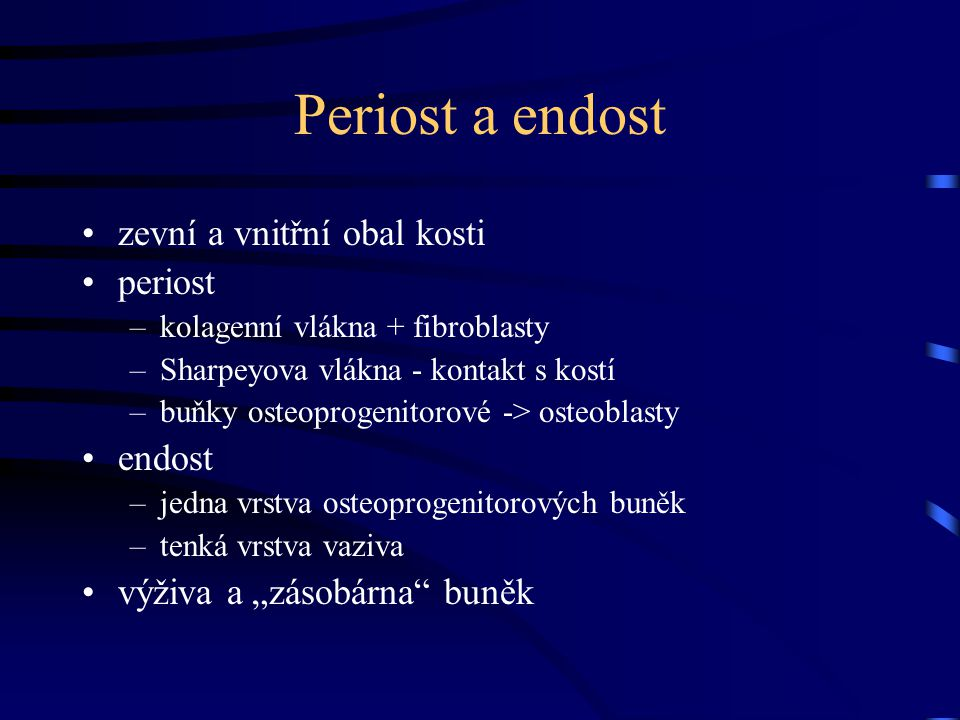 Periost a endost zevní a vnitřní obal kosti periost endost