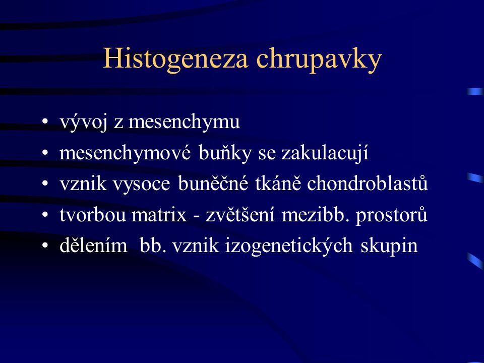 Histogeneza chrupavky