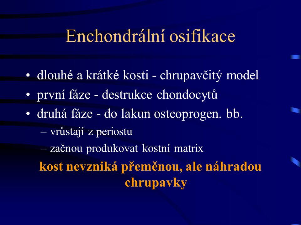 Enchondrální osifikace