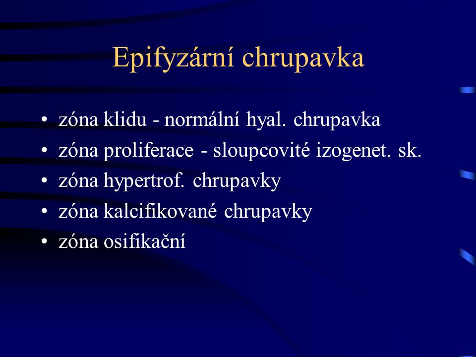 Epifyzární chrupavka zóna klidu - normální hyal. chrupavka