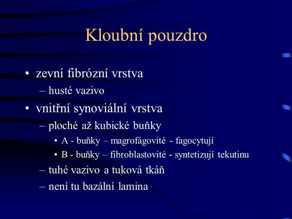 Kloubní pouzdro zevní fibrózní vrstva vnitřní synoviální vrstva