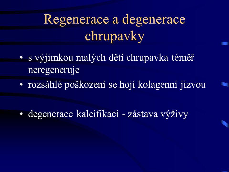 Regenerace a degenerace chrupavky
