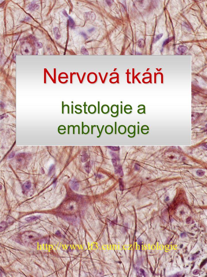Nervová tkáň histologie a embryologie