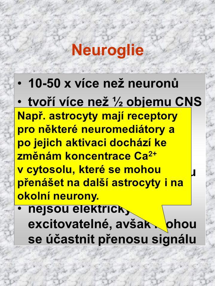 Neuroglie 10-50 x více než neuronů tvoří více než ½ objemu CNS