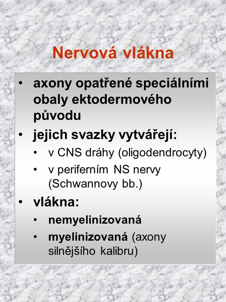 Nervová vlákna axony opatřené speciálními obaly ektodermového původu